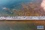 青岛栈桥旁的海水浴场(8月10日摄)。新华社记者 郭绪雷 摄