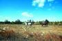 游客在湿地内骑马。